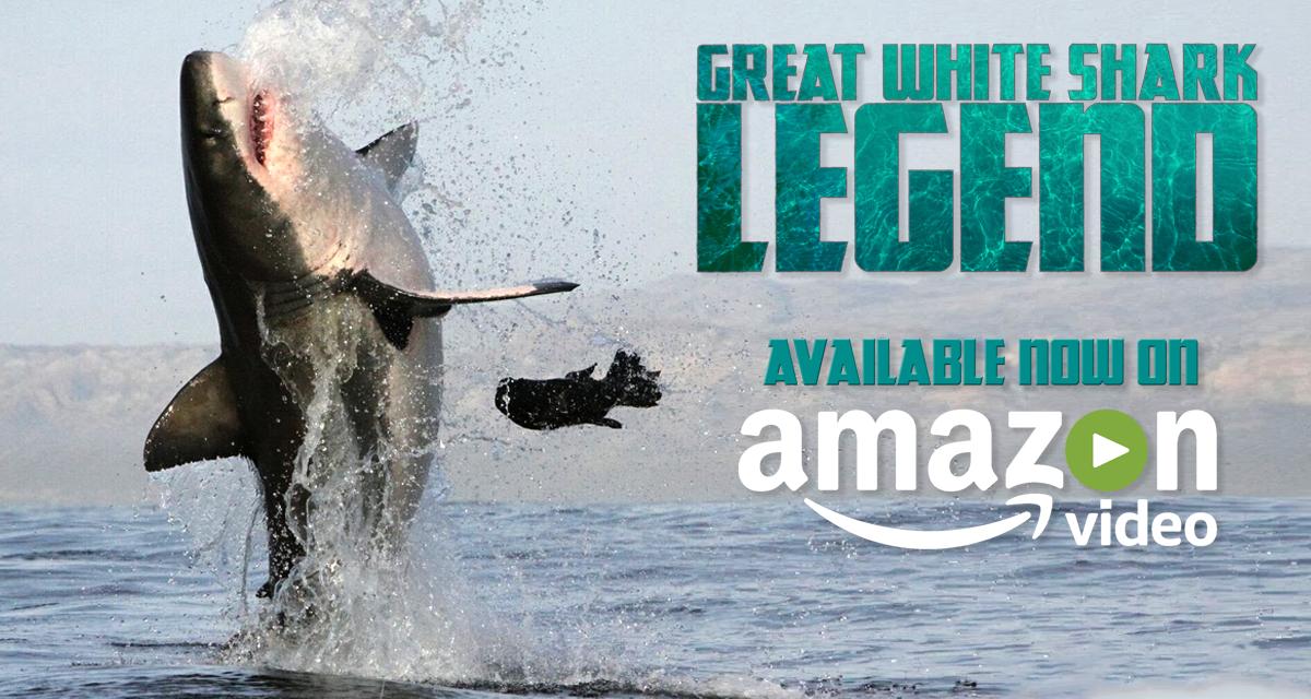 Great White Shark Legend trailer